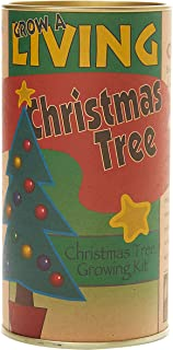 The Jonsteen Company Living Christmas Tree | Seed Grow Kit