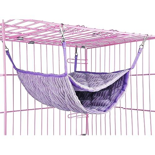 Pet Rats: Amazon com