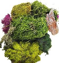 Best succulent terrarium moss Reviews