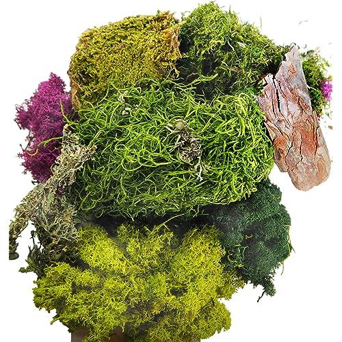 Moss Terrarium Amazon Com