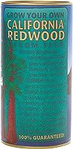 California Redwood (Giant Sequoia) | Tree Seed Grow Kit | The Jonsteen Company