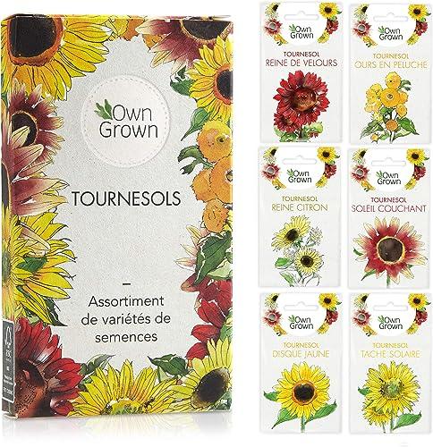 Kit de graines de tournesol: Graines de tournesol de qualité supérieure avec 6 variétés de belles graines de fleur d'...