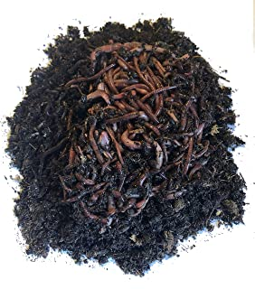 Best 1 lb red wiggler worms Reviews