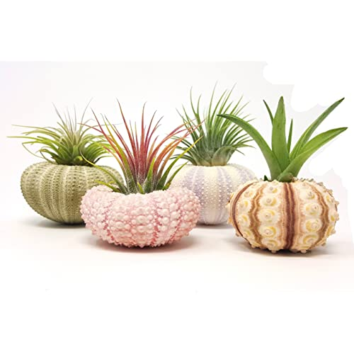 Image result for home decor small live plants