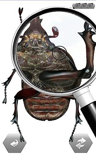 『世界の昆虫採集』の6枚目の画像