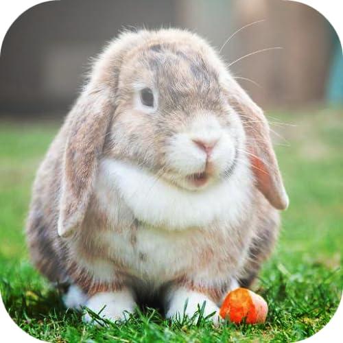 besten Kaninchen Wallpapers