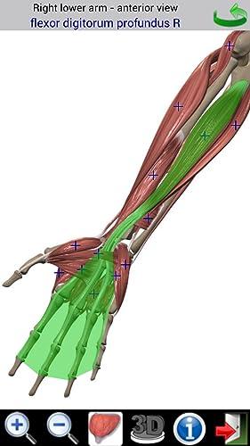 『Visual Muscles 3D』の4枚目の画像