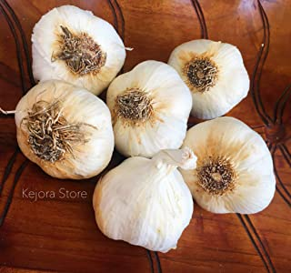 KEJORA Fresh Garlic Bulbs for Planting OR Eating and Cooking - Qty : 6 Bulbs