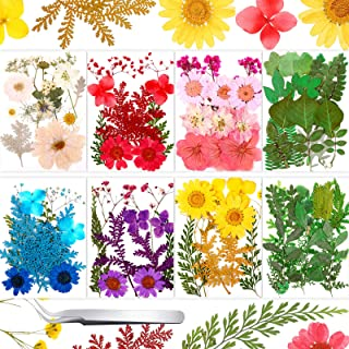 109 Pieces Real Dried Press Flowers Set, Natural Pressed Dry Flowers Leaves Mixed Multiple Dried Flowers with Tweezers for...