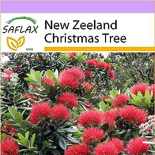 Best metrosideros new zealand christmas tree Reviews