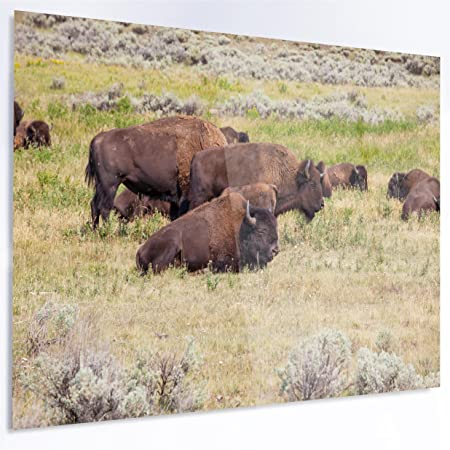 Amazon Com Designart Mt12759 28 12 Grazing Gang Of Buffalos Extra Large Animal Metal Wall Art 28 X 12 Brown Green Posters Prints