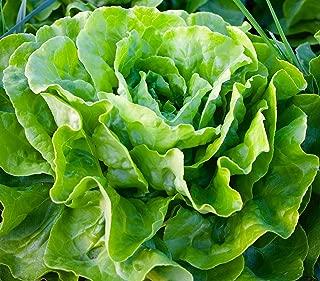 tom thumb lettuce seeds