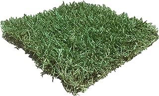 zeon zoysia grass seed