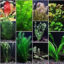 10 Species Live Aquarium Plants Package - Anacharis, Swords, Vallisneria and More!