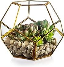 KooK Geometric Glass Terrarium, Eloquent Design, Plants, Succulents, Votive Candle Holder (Gold)