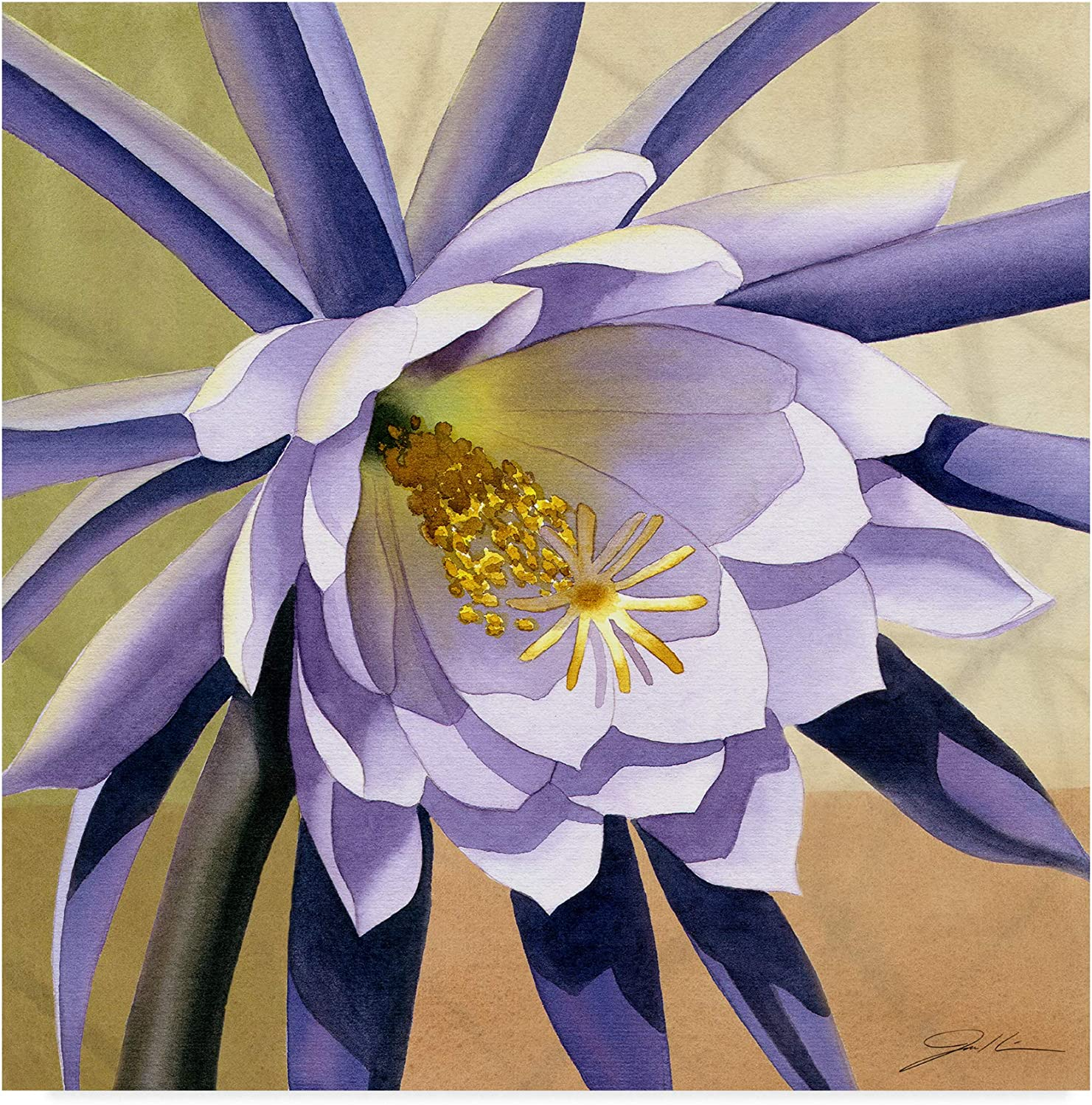 Trademark Fine Art Desert Bloom Flower Ii by Jason Higby, 14x14-Inch