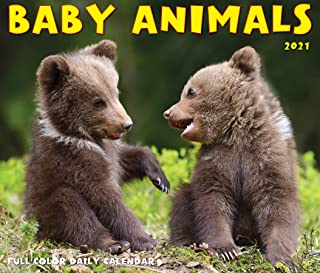Baby Animals 2021 Box Calendar
