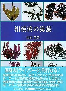 相模湾の海藻