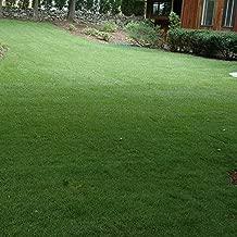 Outsidepride Midnight Kentucky Bluegrass Lawn Grass Seed - 10 LBS