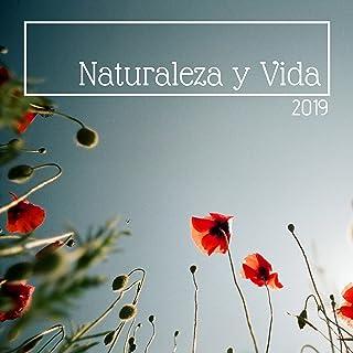 Naturaleza y Vida 2019 - Música Tranquila del Bosque Relajarse y Trabajar o Estudiar sin Estrés