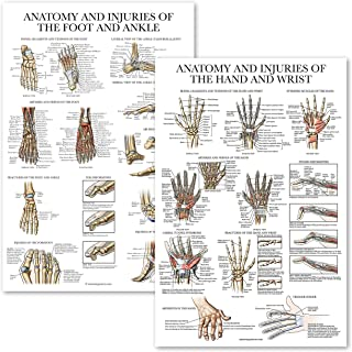 Sponsored Ad - 2 Pack - Anatomy and Injuries of The Hand & Wrist + Anatomy and Injuries of The Foot & Ankle - Set of 2 Ana...