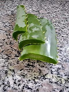 Best aloe vera  leaf Reviews