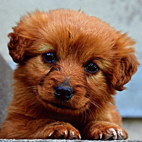 Fondo de pantalla de cachorro de bebé