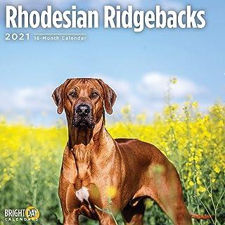 2021 Rhodesian Ridgebacks Wall Calendar by Bright Day, 12 x 12 Inch, Cute Dog Puppy