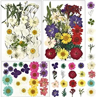 Oyifan 90 PCS Natural Pressed Dried Flower for Soap Resin Making Assorted Flowers Art Floral Decors