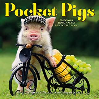 Pocket Pigs Wall Calendar 2020 [12