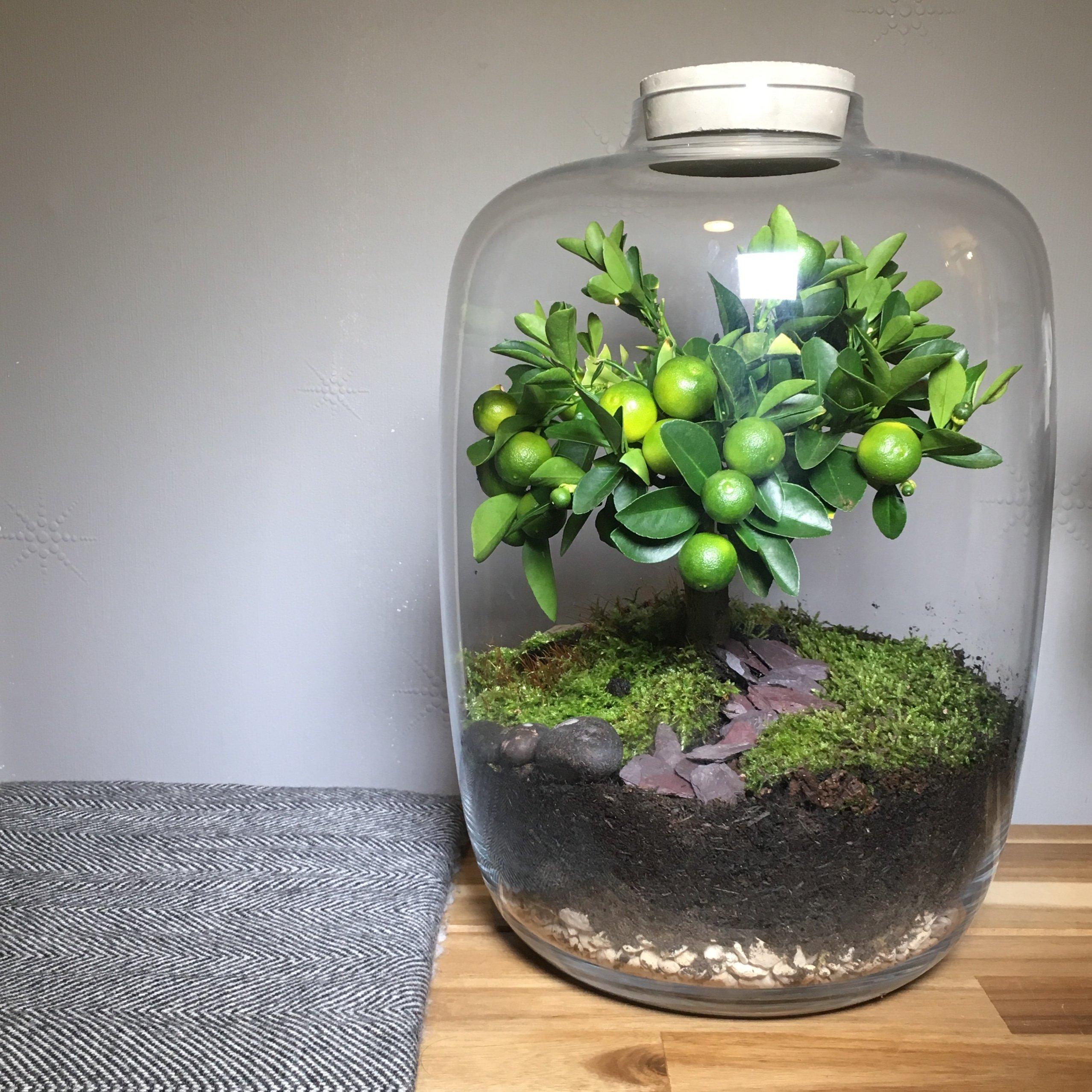 Kit de terrario de vidrio transparente con parte superior redonda para hormigón, maceta para flores, para interior y exterior, jarrón para centro de mesa, fittonia, helecho, musgo, bonsái, plantas: Amazon.es: Jardín