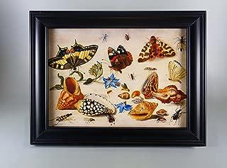BiblioArt Series J.V.ケッセル 蝶の博物画 額装品