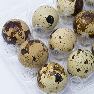 Quail Egg Cartons, Pack of 100, Each Holds 12 Quail Eggs, Bulk Carton for Dozens of Small Eggs, Quail, Pheasant, or Grouse, Cartons Only No Eggs Included, by American Heritage Industries