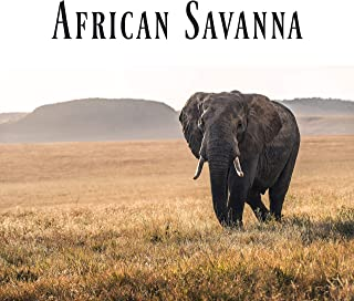 African Savanna: Collection of African Sounds of Nature with Traditional Rhythms of Tribal Drums