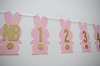 Monthly Photo Banner, Bunny Theme Banner, Bunny Party Decor, Bunny Birthday Banner, 1st Birthday Decor, Bunny 1st Birthday