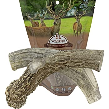 WhiteTail Naturals | 2 Pack | XX Large, Premium Deer Antlers for Big Dogs | All Natural Jumbo XLarge Dog Antler Bully Chews | Perfect for Agressive Power Chewers | Made in The USA