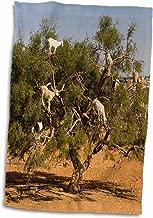 3D Rose Morocco-Essaouira. Famous Argan Climbing Goats in A Tree Hand Towel, 15 x 22
