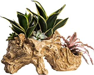NCYP Artificial Twisted Driftwood Planter Resin Tree Toot Flower Pot Large Sculpture Succulent Air Plants Multilayer Irregular Hallow Out Holder for Decoration No Plants 13 X 5.5 X 7 Inches