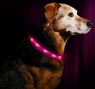 Illumiseen LED Dog Necklace Collar - USB Rechargeable Loop - Available in 6 Colors - Makes Your Dog Visible, Safe & Seen