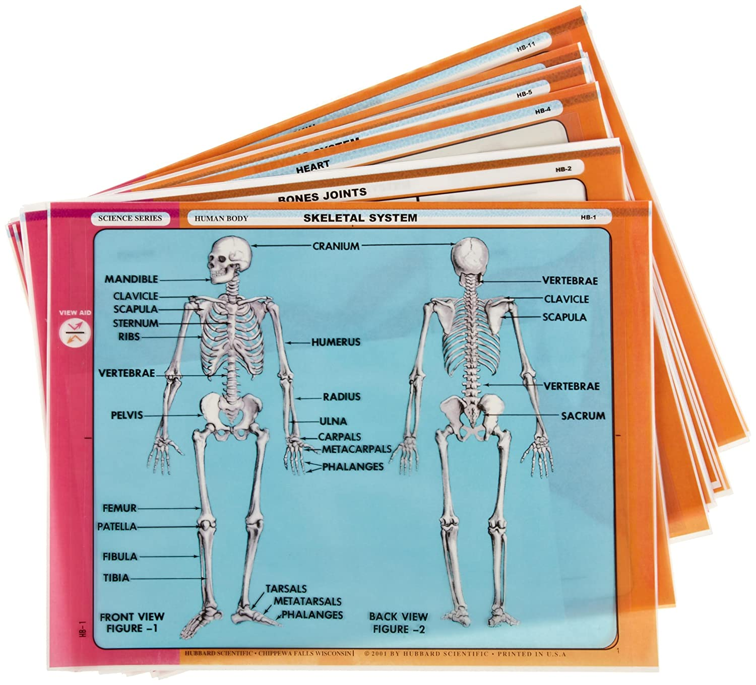 human body systems classroom materials transparencies
