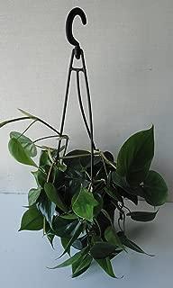 Best heart leaf plant Reviews