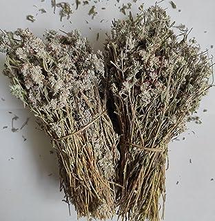 Wilde Griekse Gamander Hele Bos 85g tot 1,95KG Teucrium Chamaedrys (950 gram)