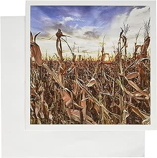 3dRose Greeting Cards, Nebraska, Near Omaha. Cornfield Agriculture (gc_144985_1)