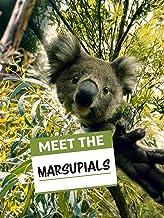 Meet the Marsupials