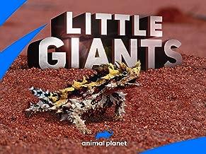 Little Giants Season 1