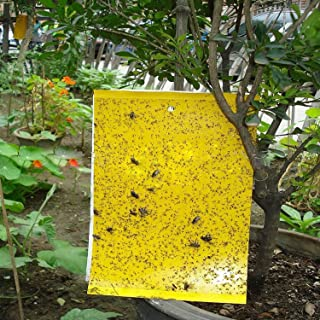 JTHM Dual-sided Yellow Sticky Fly Trap, for Leaf Miner, Aphids, Fungus, Gnats, Mosquitoes, Whitefly, Moths & Other Flying Insects Effective ( 16 pcs)