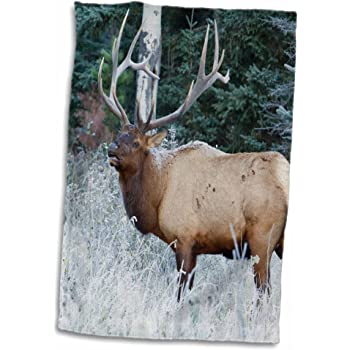 Amazon Com 3d Rose Rocky Mountain Bull Elk Alberta Hand Towel 15 X 22 Home Kitchen