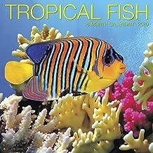 Tropical Fish 2020 Wall Calendar