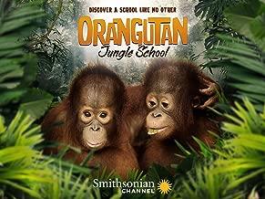 Orangutan Jungle School - Season 1
