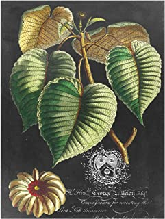 Bilderwelten Pizarra magnética - Vintage Royales Foliage On Black I 40x30cm